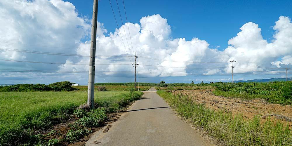 小浜島の一本道